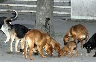 Азил за псе у Прњавору удомио 7 паса из Котор Вароша