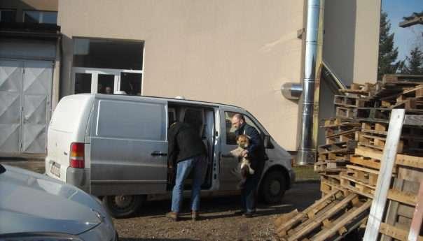 Азил за псе у Прњавору удомио десет паса из Котор Вароша