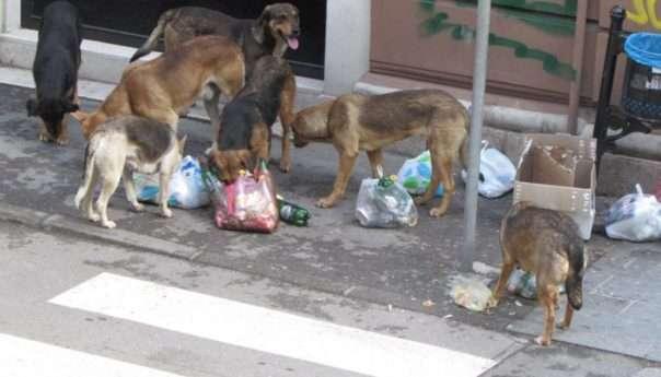 Šest pasa lutalica smješteno u azil u Prnjavoru