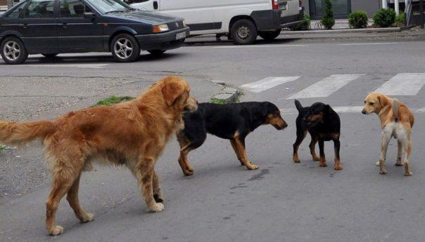 У азил за псе у Прњавору смјештено осам луталица из Котор Вароша